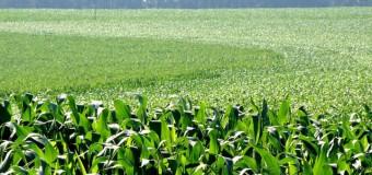 Menor fluxo de milho eleva custo de frete de fertilizantes, diz Heringer