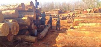 Polícia Ambiental apreende seis caminhões com madeira ilegal em RO
